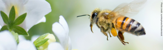 af3d1a3c121 Ban Bee-Killing Pesticides